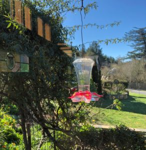 Hummingbird through the window 1