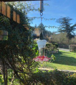 Hummingbird feeder outside in sunshine